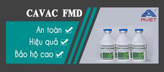 [Avac] FMD 300x145