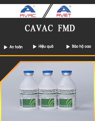 [Avac] FMD - 300x420