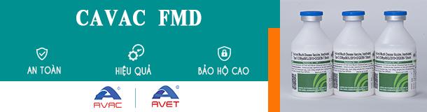 [VietDVM-Avac] FMD 610x160