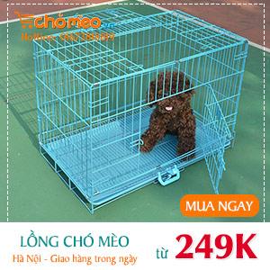 [ChóMèo.vn] Chuồng chó mèo 2 _ 300x300