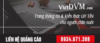 [VietDVM] liên hệ quảng cáo 300x145