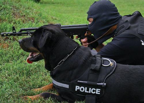 Giống chó Rottweiler được phục vụ trong quân đội