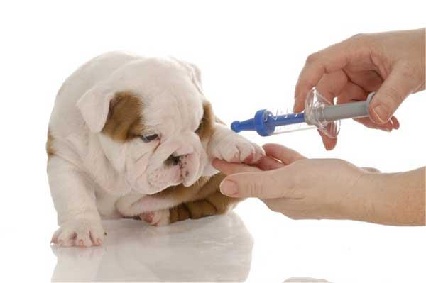 tiem vaccine cho cho