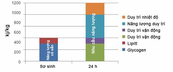 Năng lượng duy trì của heo sơ sinh và sau 24 giờ của heo con