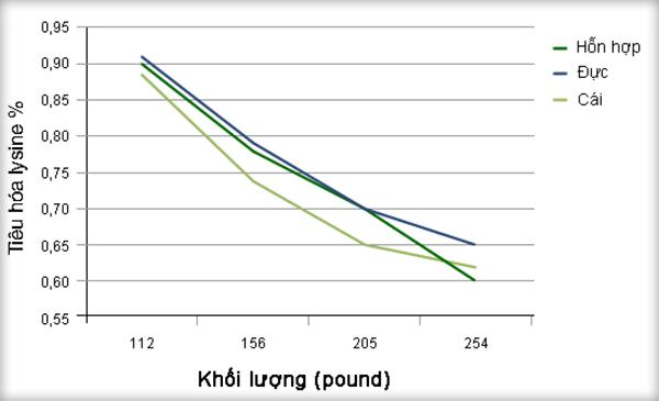 Hình 1: Nhu cầu tiêu hóa lysine của heo thí nghiệm trên 2 trang trại PIC và trang trại KSU