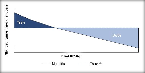 Hình 3: nhu cầu lysine theo từng giai đoạn phát triển của heo so với mức lysine trong một khẩu phần ăn bình thường