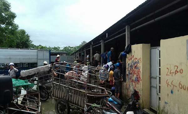 Thương lái tranh nhau chọn mua heo hơi tại chợ heo An Hội (Bình Lục - Hà Nam). Ảnh: Việt Tùng