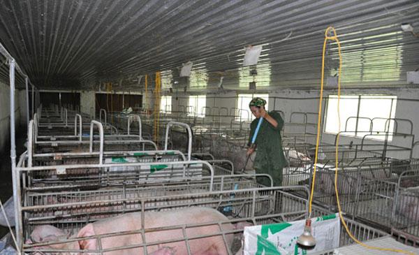 Dù giá lợn tăng, nhưng hầu hết các hộ chăn nuôi đã không còn lợn. Đối tượng được hưởng lợi lớn nhất đợt này là những công ty lớn, đặc biệt là C.P.