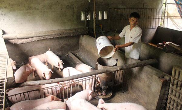 Đàn lợn nái trong dân đang giảm mạnh, trong khi của C.P và các công ty chăn nuôi lớn vẫn duy trì ổn định. Như vậy, rất nhiều hộ dân đã bị loại ra khỏi cuộc chơi lần này. Nguy cơ giá thực phẩm bị các công ty lớn, trong đó có C.P thao túng trong thời gian tới đang hiện hữu hơn bao giờ hết
