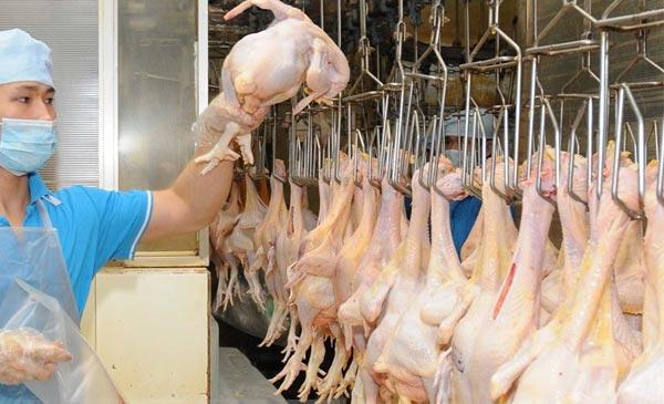 Việc thịt gà Việt Nam được thị trường Nhật chấp nhận tiếp tục