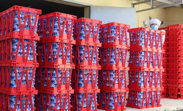 Lô trứng được đóng gói để xuất khẩu