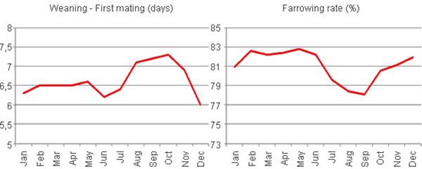 Biểu đồ thể hiện heo được phối vào giai đoạn thời tiết bất lợi có tỷ lệ lên giống thấp và tỷ lệ sảy thai cao