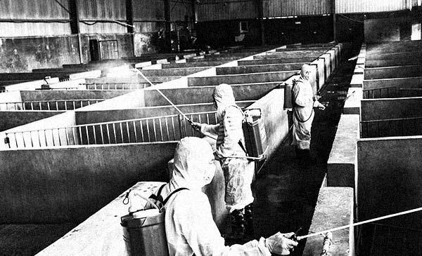 Công nhân đang phun thuốc sát trùng tại một trang trại ở Kim Hoa, Chiết Giang, Trung Quốc.