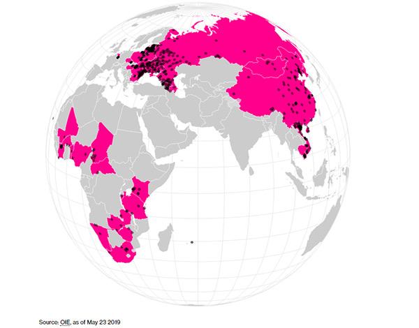 Dịch tả heo châu phi lây lan từ châu Phi sang châu Âu, châu Á tính tới tháng /2019