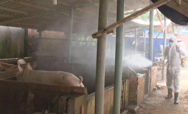 Công tác chăm sóc và vệ sinh tiêu độc không được chú trọng
