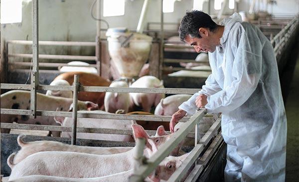Luôn kiểm tra đánh giá an toàn sinh học trong trang trại