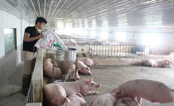 Các nhà chăn nuôi cần lưu ý hơn trong việc phòng chống dịch bệnh
